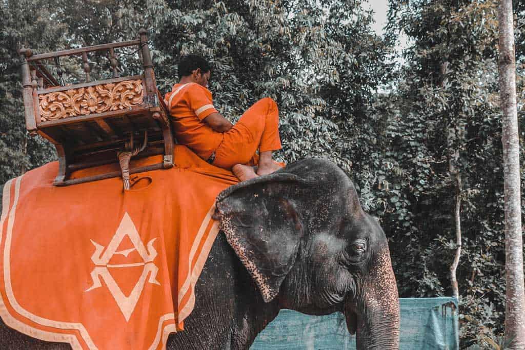 symbole éléphant