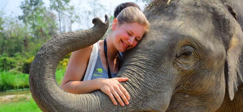 signification elephant thailande