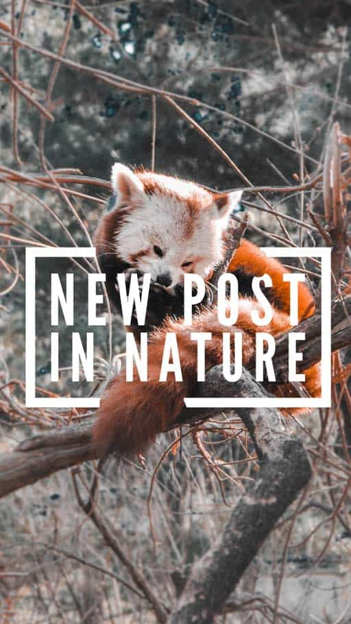 mudanças no algoritmo instagram 2019